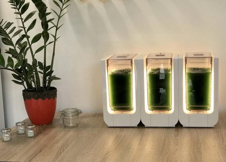 alg-and-you BLOOM-consumer design for startup spiruline prototype