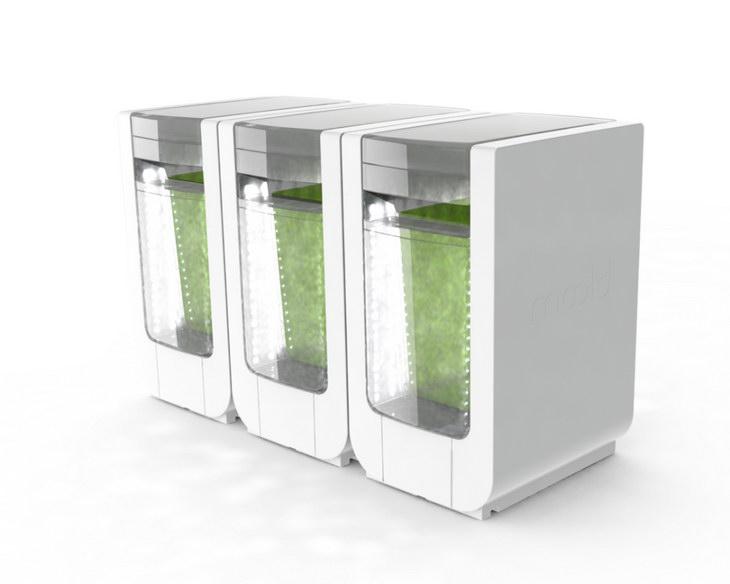 alg-and-you BLOOM-consumer design for startup spiruline render